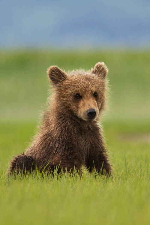 Bears Photo 7 - Large