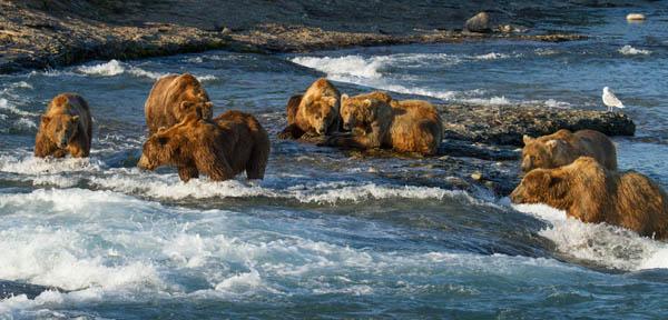 Bears Photo 1 - Large