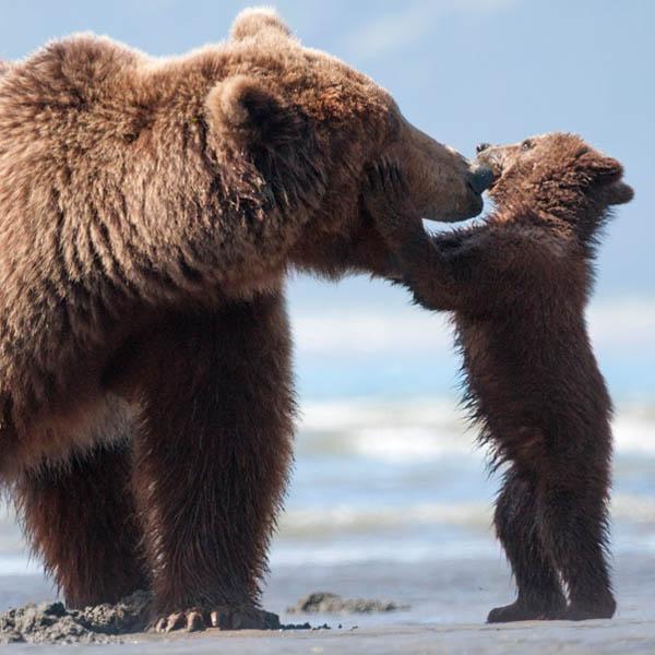 Bears Photo 6 - Large