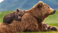 Bears Photo 4