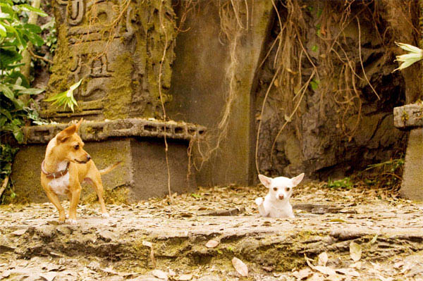Beverly Hills Chihuahua Photo 2 - Large