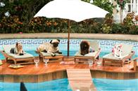 Beverly Hills Chihuahua Photo 4