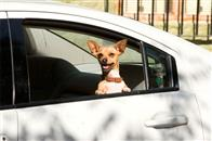 Beverly Hills Chihuahua Photo 11