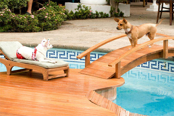 Beverly Hills Chihuahua Photo 14 - Large