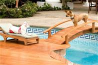 Beverly Hills Chihuahua Photo 14