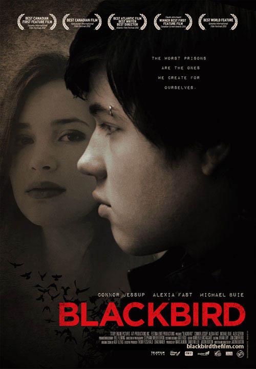 Blackbird Photo 10 - Large