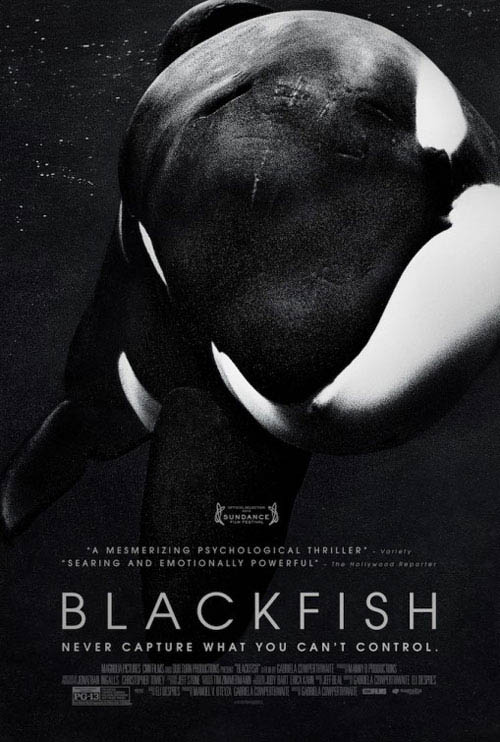 Blackfish Photo 4 - Large