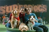 Daniel and the Superdogs Photo 4