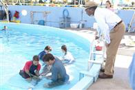 Dolphin Tale Photo 31