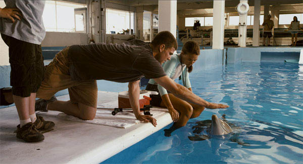 Dolphin Tale Photo 3 - Large