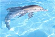 Dolphin Tale Photo 13