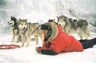 Eight Below Photo 11