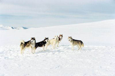 Eight Below Photo 5 - Large