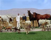 Evan Almighty Photo 25