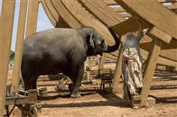 Evan Almighty Photo 12