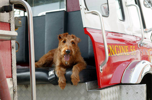 Firehouse Dog Photo 2 - Large