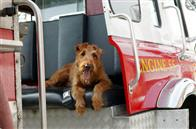 Firehouse Dog Photo 2