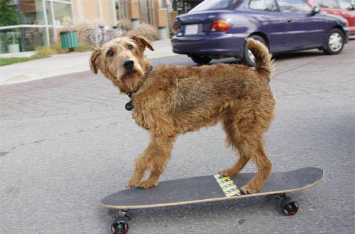 Firehouse Dog Photo 1 - Large