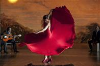 Flamenco, Flamenco Photo 13