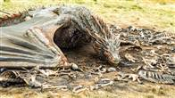 Game of Thrones: The Complete Fifth Season Photo 1