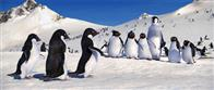 Happy Feet Photo 11