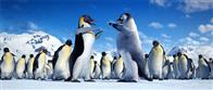 Happy Feet Photo 15