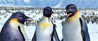 Happy Feet Photo 28