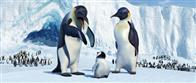 Happy Feet Photo 2