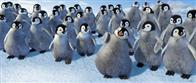 Happy Feet Photo 5
