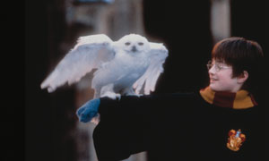 Harry Potter and the Philosopher's Stone Photo 5 - Large