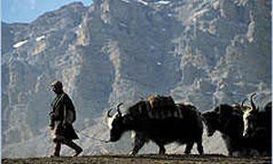 Himalaya Photo 1 - Large