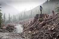 If a Tree Falls: A Story of the Earth Liberation Front Photo 2