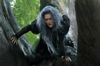 Into the Woods Photo 1