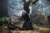 Into the Woods Photo 8