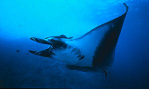 Island Of The Sharks Photo 3 - Large