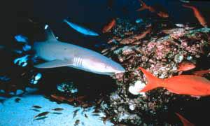 Island Of The Sharks Photo 6 - Large
