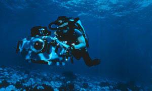 Island Of The Sharks Photo 8 - Large