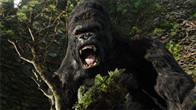 King Kong Photo 9