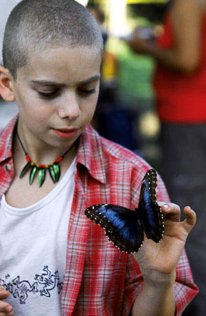 The Blue Butterfly Photo 10 - Large