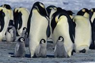 March of the Penguins Photo 11