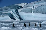 March of the Penguins Photo 1