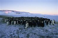 March of the Penguins Photo 3