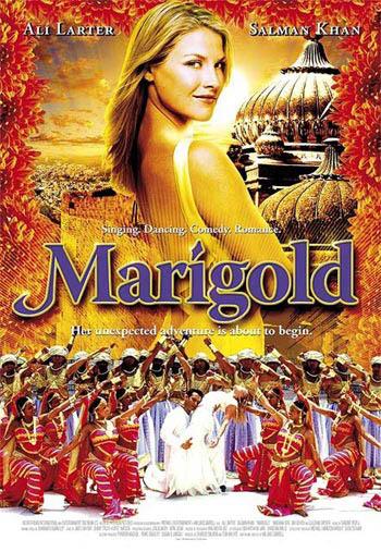 Marigold Photo 8 - Large