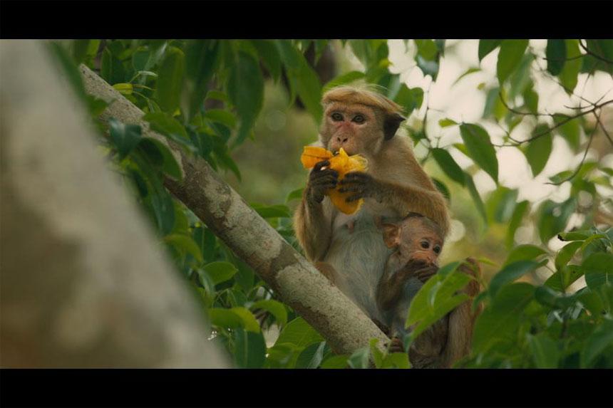 Monkey Kingdom Photo 2 - Large