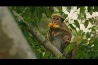 Monkey Kingdom Photo 2