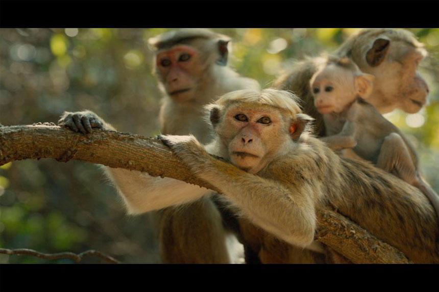 Monkey Kingdom Photo 4 - Large
