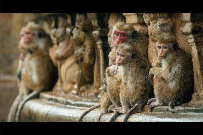 Monkey Kingdom Photo 5 - Large