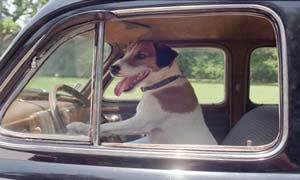 My Dog Skip Photo 1 - Large