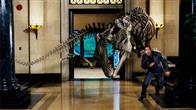 Night at the Museum Photo 4