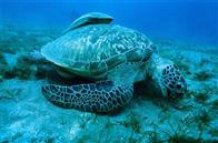 Oceans Photo 8